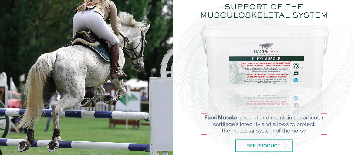 Flexi Muscle NACRICARE - Horse Muscles Supplement