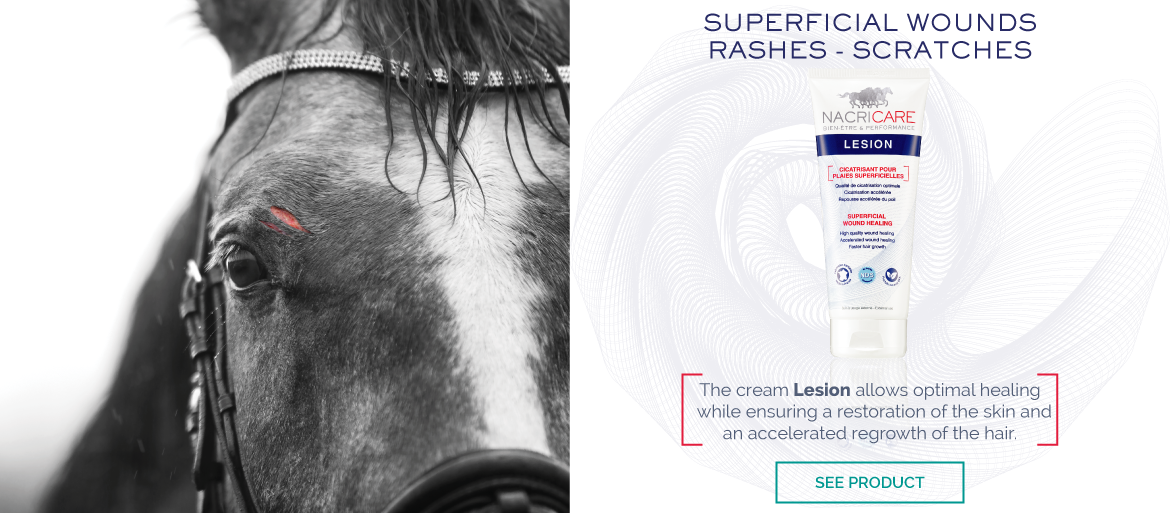 Lesion Nacricare - Horse Wound care