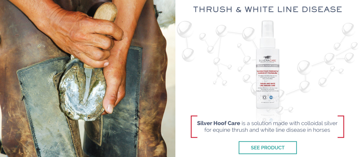 Silver Hoof Care SILVERACARE by NACRICARE - Equine Thrush White Line in Horses